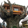tree_ancient_house