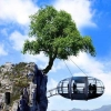 tree_hanging_house